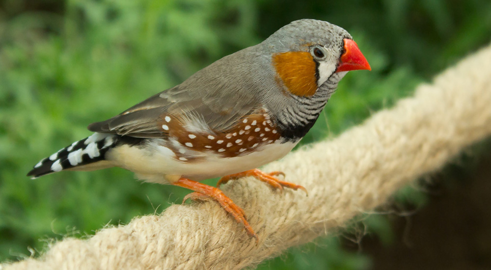 Zebra finch housing portfolio archive 187 bird exotic for Should i buy a house with polybutylene pipe